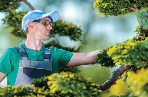 Les métiers de l'horticulture et du paysage